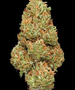 Mango Mountain 3.5 grams